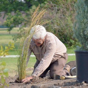 Native plants that are drought-tolerant were planted.