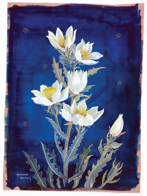 Annora Brown's painting of the Evening Star. Photo courtesy the Glenbow Museum.