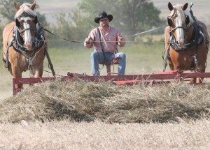 PHOTO BY FRANK MCTIGHE, THE MACLEOD GAZETTE Heritage Acres Farm Museum's 29th annual show will feature old-time farming demonstrations, including raking.