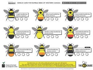 bumblebee census