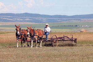 Field demonstrations using antique equipment will be part of Heritage Acres' annual show.